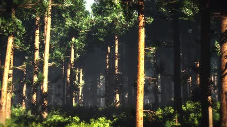 sprookjesbos : 4K Epic Evergreen Forest Cinematic 3D-animatie 5 Stockvideo