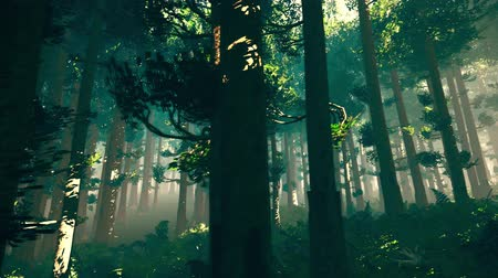 fatörzs : 4K Epic Evergreen Forest Cinematic 3D Animation 7