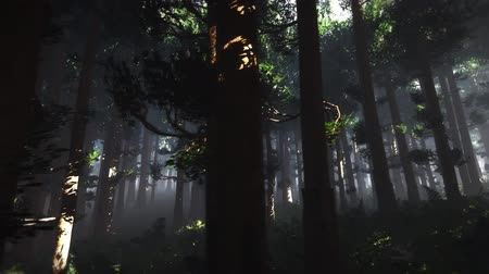 fatörzs : 4K Epic Evergreen Forest Cinematic 3D Animation 8