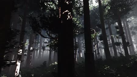 fatörzs : 4K Epic Evergreen Forest Cinematic 3D Animation 9