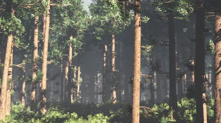 sprookjesbos : 4K Epic Evergreen Forest Cinematic 3D Animation Flat 2