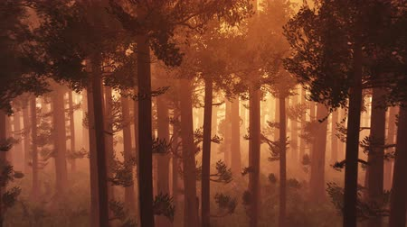 fatörzs : 4K Wonderful Epic Evergreen Forest in the Sunset Aerial 3D Animation 1
