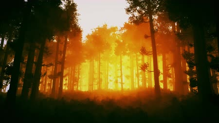 fatörzs : 4K Wonderful Epic Evergreen Forest in the Sunset Cinematic 3D Animation 2 Stock mozgókép