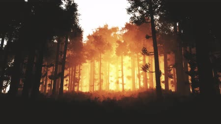 fatörzs : 4K Wonderful Epic Evergreen Forest in the Sunset Cinematic 3D Animation 3