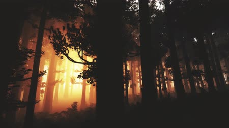 fatörzs : 4K Wonderful Epic Evergreen Forest in the Sunset Cinematic 3D Animation 8 Stock mozgókép