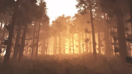 fatörzs : 4K Wonderful Epic Evergreen Forest in the Sunset Cinematic 3D Animation Flat