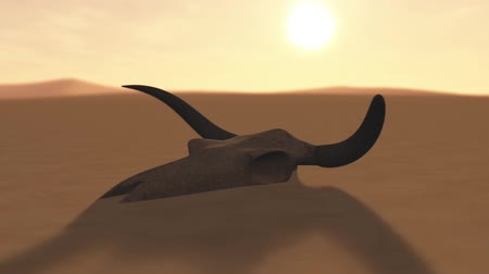 рог : Bull Skull in Desert Global Warming Poaching Concept 3D Animation 3 Стоковые видеозаписи