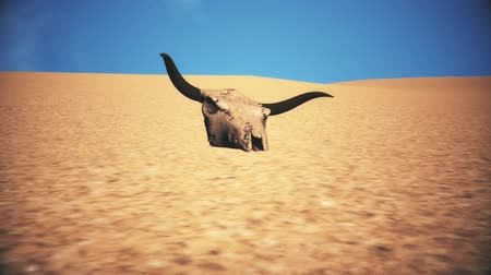 búfalo : Bull Skull in Desert Global Warming Poaching Concept 3D Animation 7
