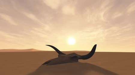 búfalo : Bull Skull in Desert Global Warming Poaching Concept 3D Animation