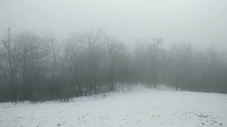 zanedbaný : 4K Pan in a Foggy Forest Scary Winter Scene