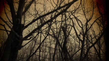 zanedbaný : Scary Winter Forest Vintage