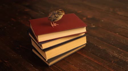 quail sitting on the book