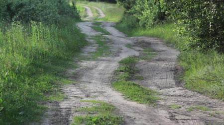 Dirt road through birch forest