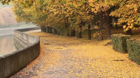 Autumn Park. Near the river Stok Video