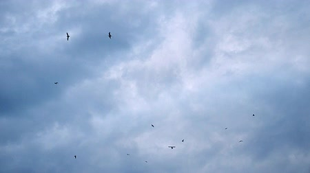 emocional : wide shot of birds flying on a cloudy day in fall  winter in Istanbul