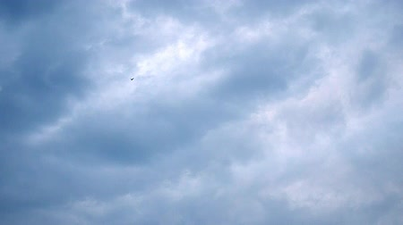 birds flying : Shot of a lonely bird flying on a cloudy sky on a fall  winter day in Istanbul