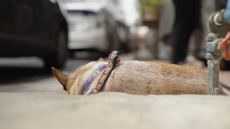 camera move : Brown Old Dog Sleep On The Concrete Floor Then Look Up Toward Camera