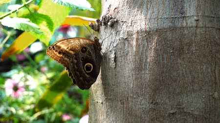 cor : Butterfly On Tree