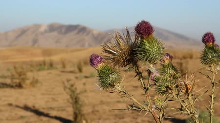 prickly : The Mountain landscape with prickly plant.