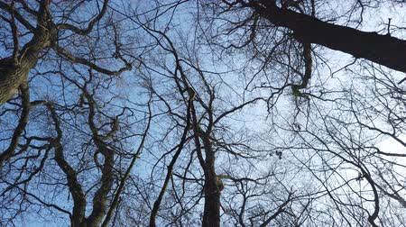 view from below : looking up to the trees, low angle