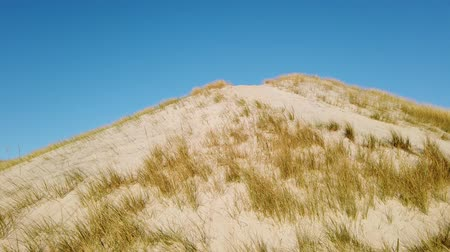 danimarka : Sand dunes with grass and a blue sky