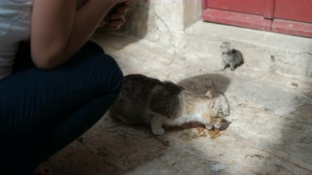 Woman is feeding a hungry cat with a small kitten on the street. Person squatting near a homeless animal in need of protection and care. In the background a newborn kitten meows and calls his mother. Animal quickly swallows food that would satisfy your bo Стоковые видеозаписи