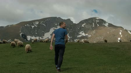 nações : Young man goes through meadow where sheep graze in outdoors. He quickly heads to fluffy animals who eat green grass