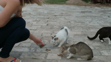 gato selvagem : Young woman feeds hungry cats on the stone pavement in the city. Pretty blonde holds glass jar in her hand and cares about homeless mammals. Animals eat meal with avidity shoving each other. Their fur are white, grey and black colors. Female is dressed in