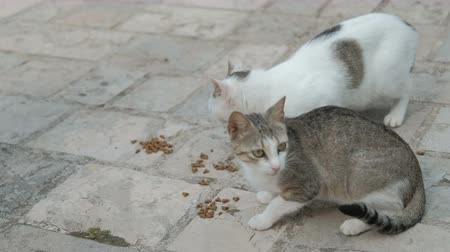 animal welfare : Two cats sitting on ground, eating cat food outdoors in park. On foreground grey kitten with white spots, light cat with brown eyes eat meat pads. people come to nature walk feed animals. Fluffy funny cat have meal. On background square asphalt, feed cute Stock Footage