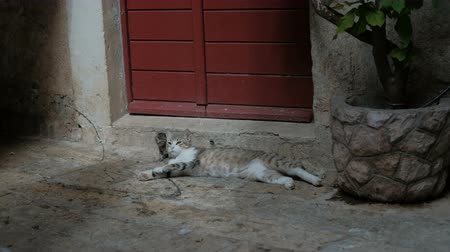 okşayarak : Cat and her kitty lay on the street near the home with red door