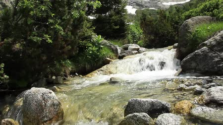 suíça : water stream in swiss mountains