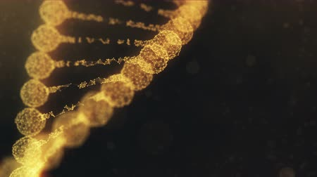 genetic code : Seamless looping 3d animation of a rotating digital plexus DNA chain. Abstract medical science research background. Golden orange version.