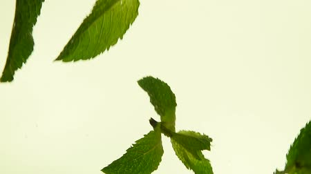 infusion : Close up several fresh green mint leaves floating in tea with air bubbles, low angle side view, slow motion