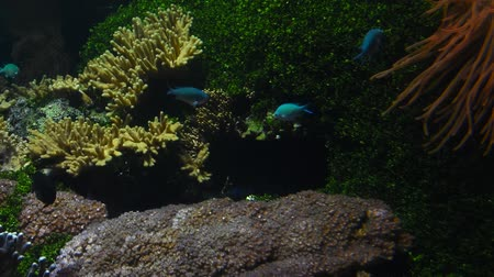плен : Underwater panorama, vivid colorful multicolor small and big tropical see fishes in aquarium with corals, algae weed and grass, close up, low angle view