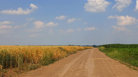 soya : Cinemagraph of earth road between green agricultural fields sunny day, white clouds run in blue sky