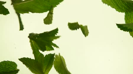 モヒート : Close up several fresh green mint leaves floating in tea with air bubbles, low angle side view, slow motion