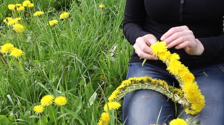 Moving camera footage of woman forming a wreath of dandelions sitting at the blossoming dandelion meadow