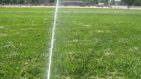 pozisyon : Moving sprinkler at a baseball field watering thick green grass in sunlight.