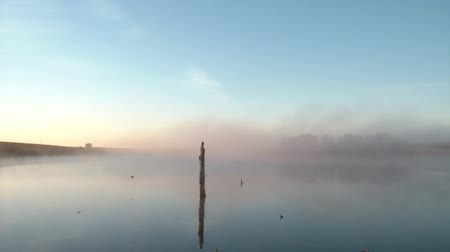 slough : Bird flies through fog over still water with lone dead tree stump in center, sun rising left of frame with blue sky above.
