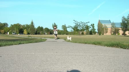 an : Boy approaches on scooter with his white puppy in illuminating angled sunlight.  Stok Video