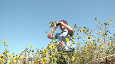 gravata : Businessman looks through binoculars in sunlight, from side to side in scenic wild sunflower field, with full blue sky in background. Stock Footage