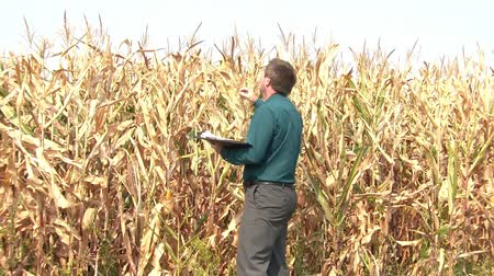 low lighting : Man in business attire checks what drought has done to dry cornfield, and reports on conditions by writing on pad, in sunny lighting.