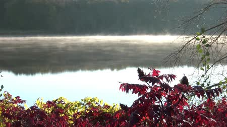 Fog is drifting over a calm lake at sunrise with colorful red fall foliage in the foreground.  Vídeos