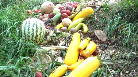 etli : Brightly colored fruits and vegetables are discarded in grass in natural light including watermelon, squash, tomatoes, and cantaloupe.
