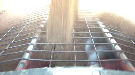 promover : Grain is emptied off truck into spinning dryer and separation system below, dust is illuminated by sunlight.