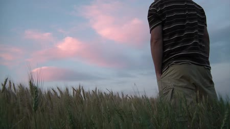maravilhoso : Man watches soft pink clouds while in a wheat field at a summers dusk.