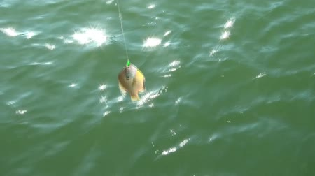 spent : On a boat in summer, girl reels in fish with help from adult and camera pans up to sun over lake at end of clip.