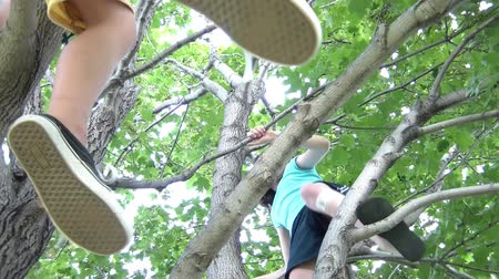 güçlü : Shot from below, girl climbs in tree while her friends two feet randomly dangle from a branch above. Stok Video