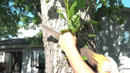 irony : Man is manually sawing branches off of a tree in the summer sun.