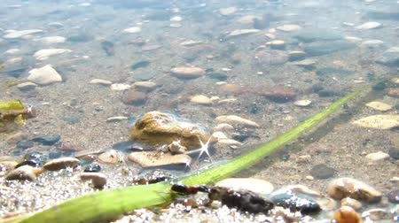 yabanarısı : Large army ant walks the beach in sunshine at the waters edge and manages to climb over long green leaf as well. Stok Video